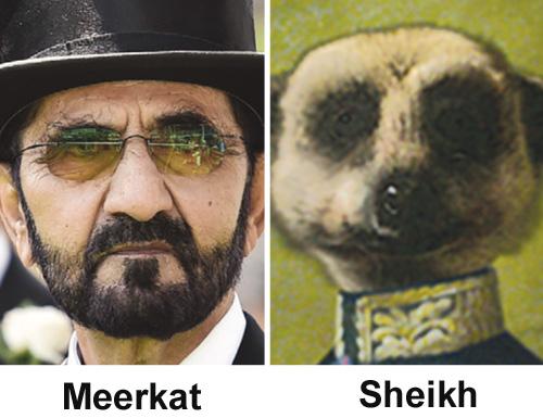 sheikh-meerkat.jpg